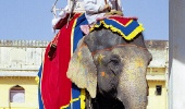 Слон — кормилец