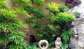 В японском дворике