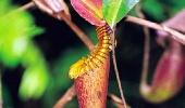 Природа Борнео