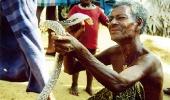 Калуа - ланкийские цыгане