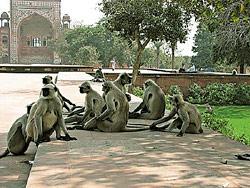 Нужны ли обезьянам деньги?