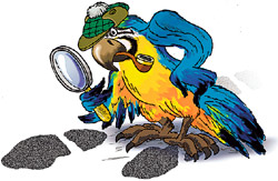 Как попугай полиции помог