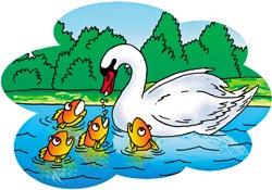 Лебедь кормит стаю рыб!