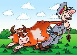 Коровы - террористки