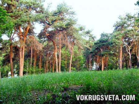 Сосновая Горка (ул. Клочковская)