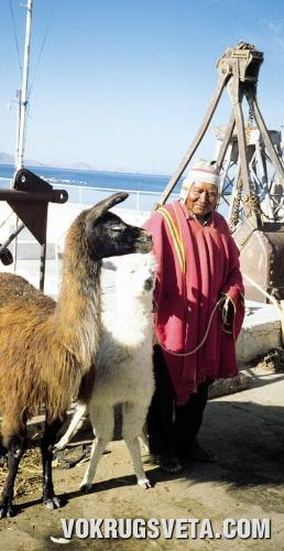 Мастер Лимачи в окружении альпака