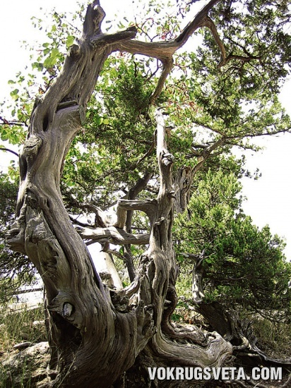 Причуды деревьев