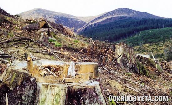 Вырубленный карпатский лес