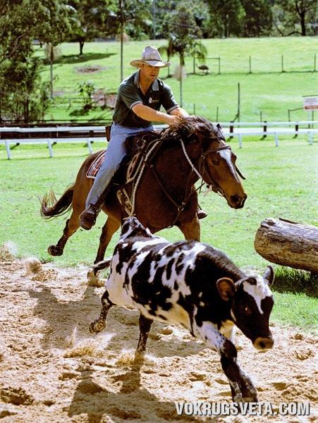 Австралийский ковбой