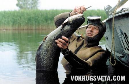 Сом - трофей рыбака